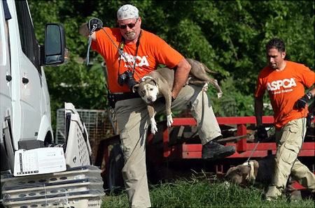 Aspca dogfighting