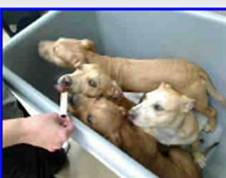 Litter of puppies from omaha2