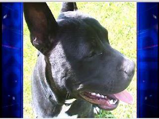 Lakewood OH Dog