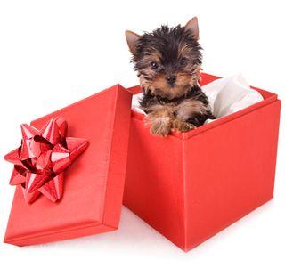 Holiday_puppy