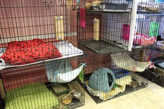 Empty cat cages