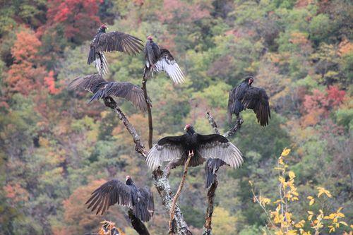 Arkansas - Fall 2012 339