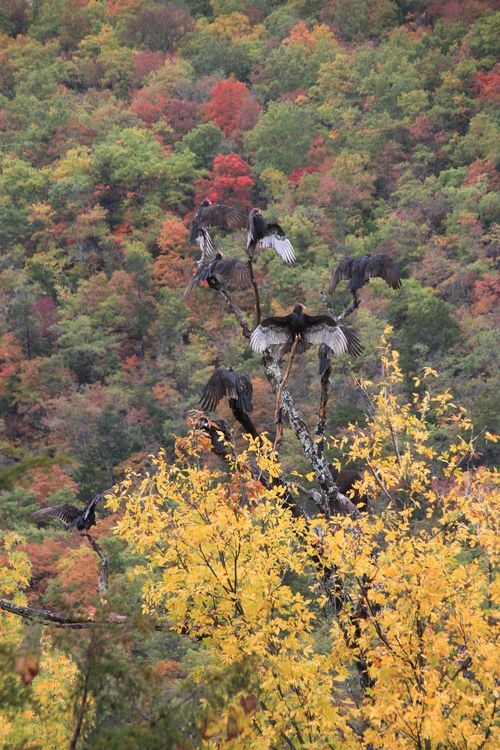 Arkansas - Fall 2012 342