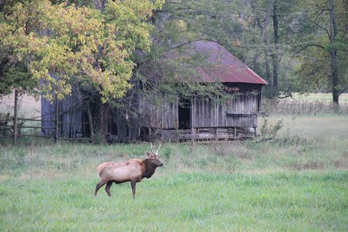 Arkansas - Fall 2012 237