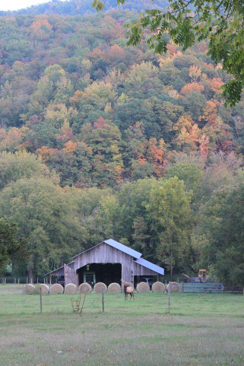 Arkansas - Fall 2012 252