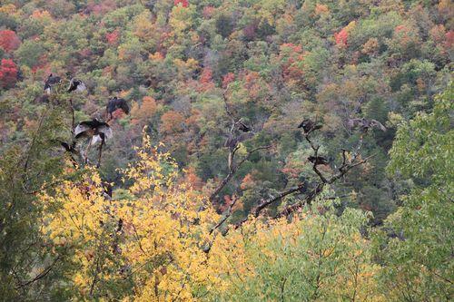 Arkansas - Fall 2012 346
