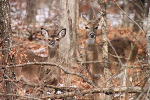 Arkansas - December 2012 063