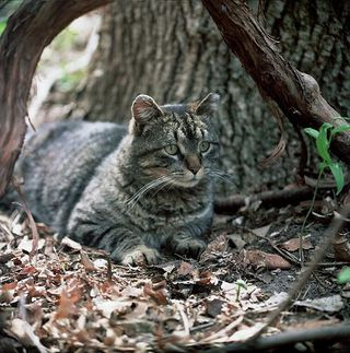 Feral-cats-726124