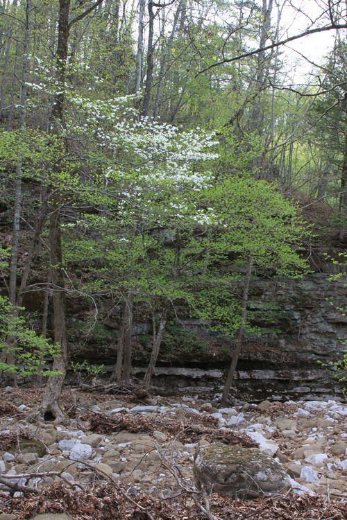 Arkansas - April 2013 042