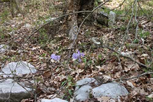 Arkansas - April 2013 024