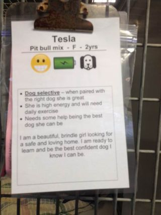 Kennel Card - Tesla