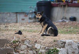 STRAY DOGS 20141204 SLK 0111F