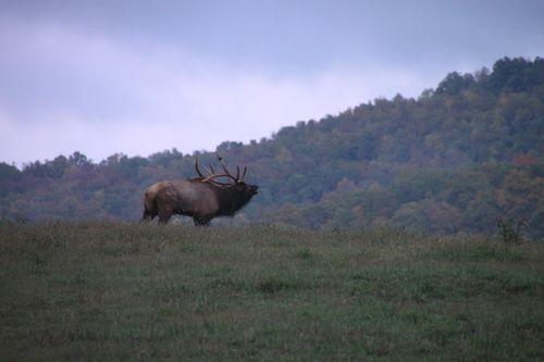 Arkansas - Fall 2012 420