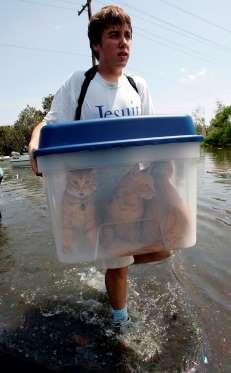 Katrina - cats