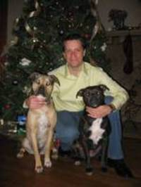 Dogs_christmas_photo