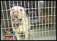 Indy_animal_shelter